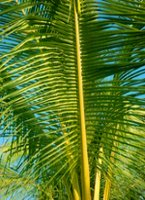 Palm_leaves_chaos
