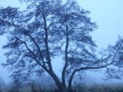 lines_tree