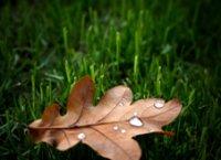 oak_leaf_colour