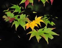 triangles_leaves