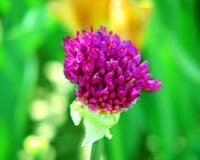 flower_focal_point
