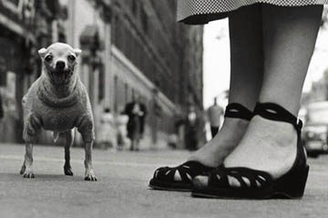 Elliot_Erwitt_New_York