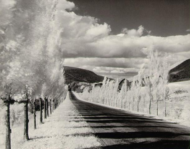 Minor_White_Road_with_Poplar_Trees