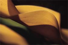 Texture_leaves